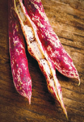 Borlotti Bean, a variety of cranberry bean bred in Italy to have a thicker skin. Also known as French horticul-tural beans, they have an appealing sweet mild, some-times nutty flavor and are the heart of many northern Italian dishes. Original cultivated in Colombia.